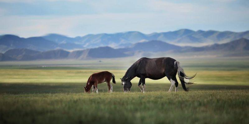 Voyage d'exception à cheval